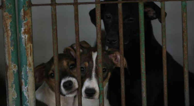 Resgatados após maus-tratos e abandono, animais esperam por adoção no CVA de Recife, PE