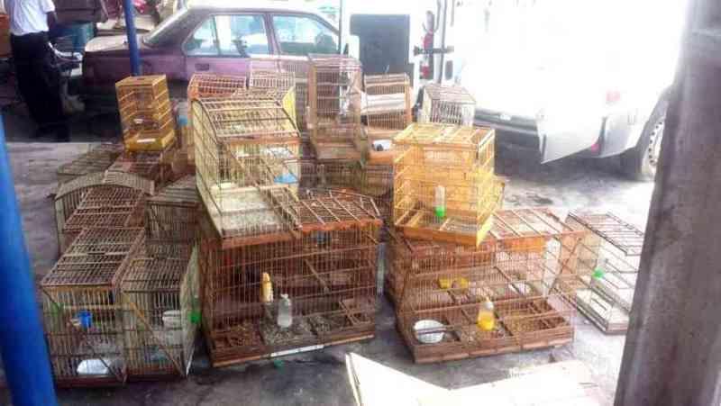 Denúncia anônima possibilita resgate de 46 aves silvestres