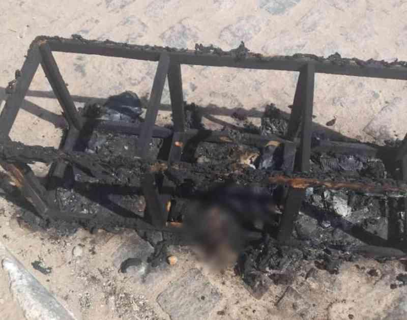 Moradores de Petrolina (PE) denunciam caso de gatos queimados vivos