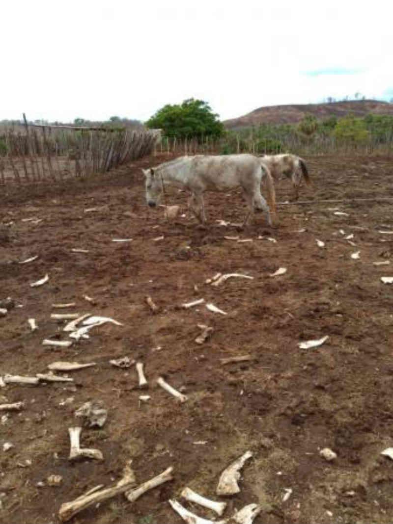 Prefeitura de Luzilândia (PI) é alvo de acusações de possíveis maus-tratos a animais apreendidos no município