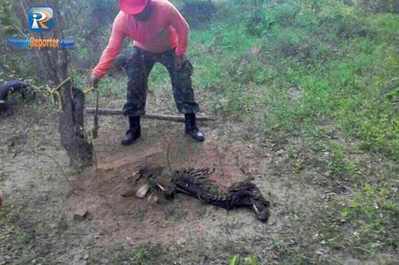 Cachorro morre após ser amarrado em árvore sem comida no PI