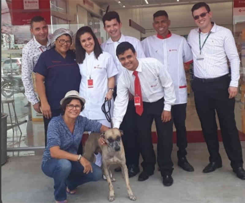 Cãozinho de rua é acolhido por funcionários de farmácia em Teresina (PI) e espera por lar