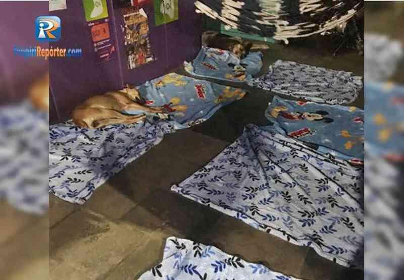 Associação de proteção aos animais doa lençóis para cães de rua em Piripiri, PI