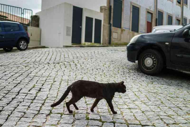 PAN quer acabar com a proibição de alimentar gatos de rua em Portugal