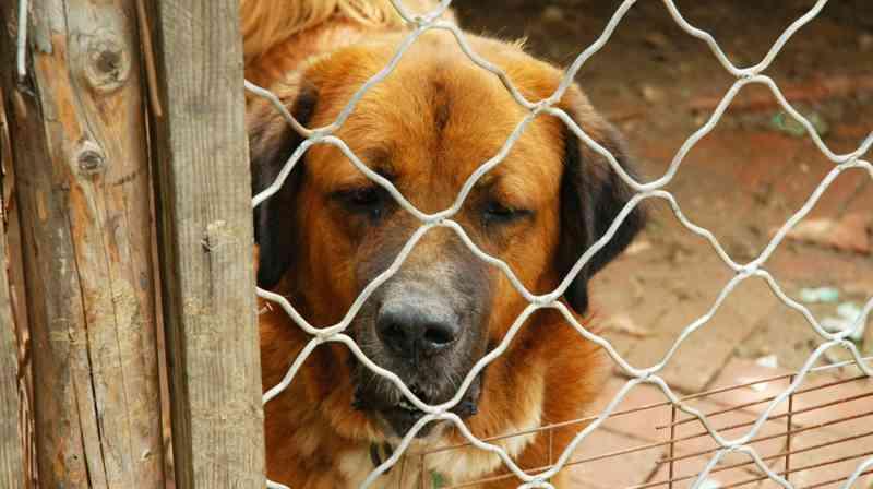 Governo aprova apoios a 17 entidades para centros de recolha de animais em Portugal