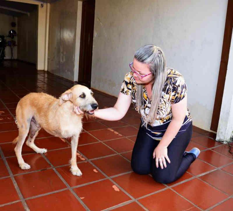 Apucarana (PR) registra média de 20 casos de maus-tratos de animais por mês