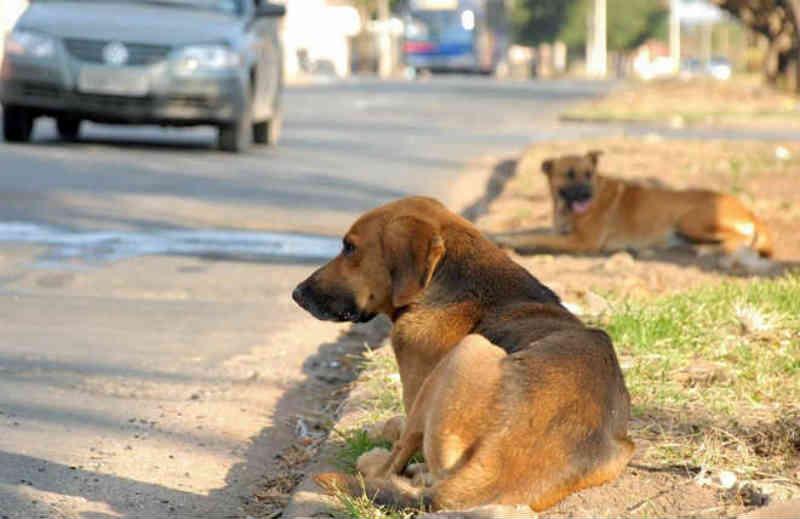 Funcionários da zoonoses começam a recolher animais abandonados pelas ruas em Araruna, PR