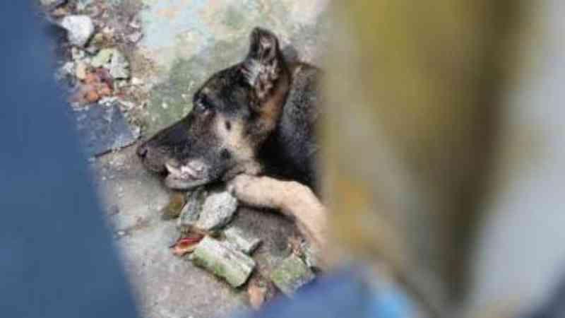 Família viaja e cachorro morre de fome e sede em Chopinzinho, PR