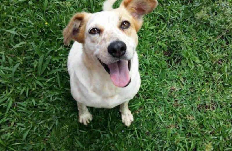 Pela primeira vez, Curitiba (PR) faz ações contra abandono de animais