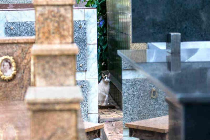 Cemitérios viram ponto de 'descarte' de cães e gatos em Londrina, PR