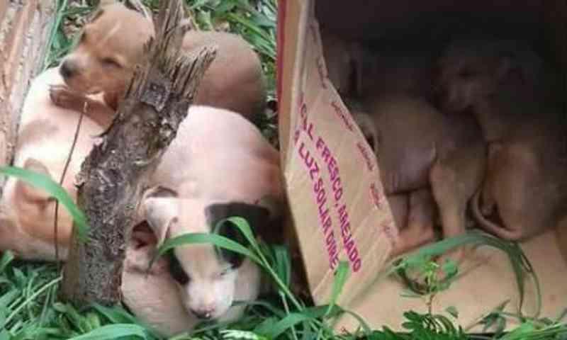 Sete filhotes de cães são abandonados em terreno baldio em Cascavel, PR