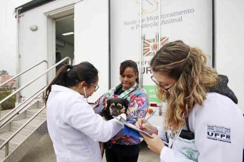 Programa da Prefeitura castrou mais de 16,7 mil cães e gatos em Curitiba