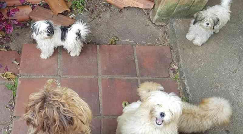 Mais de 20 cães em situação de maus-tratos são apreendidos em casa no Pilarzinho, em Curitiba
