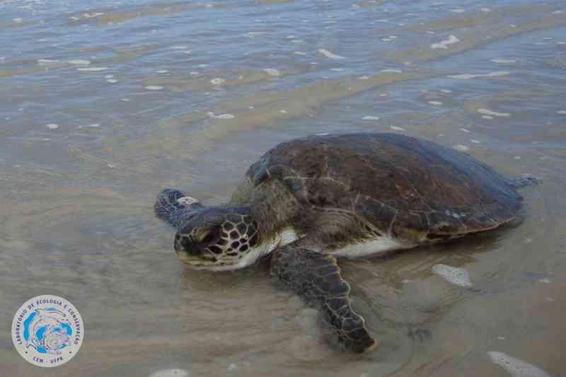 Saiba o que fazer se encontrar um animal marinho no litoral do estado do Paraná