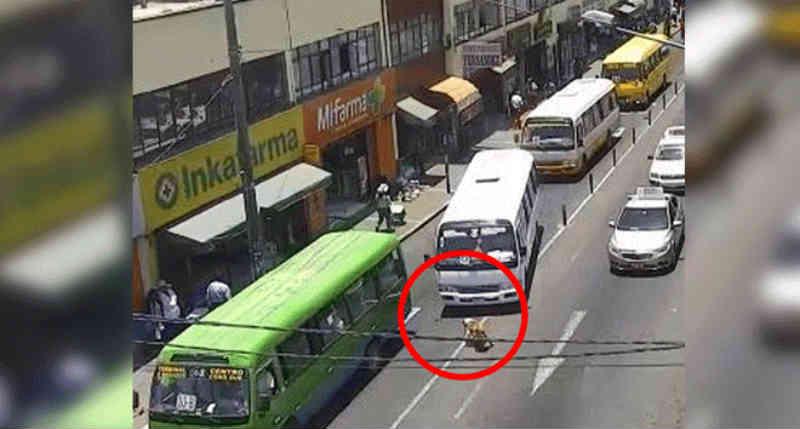 No Peru, motorista que atropelou de propósito o cão 'Gringasho' é multado