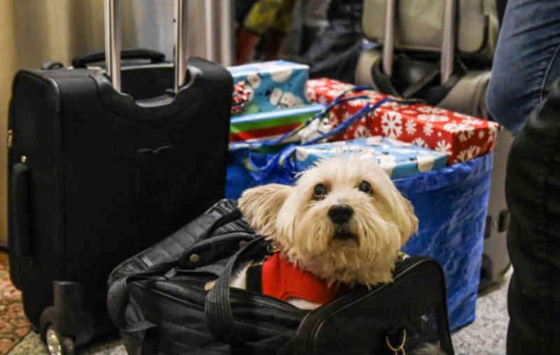Porque 'os animais não são prendas', há associações que param as adopções no Natal