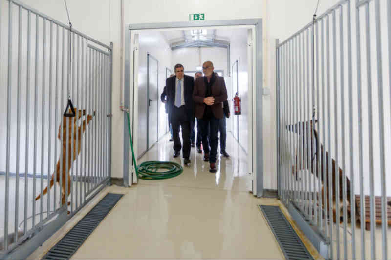 Portugal: Santo Tirso cria cheque veterinário anual de 7.500 euros para animais em risco