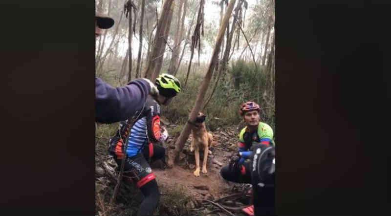 Grupo de ciclistas resgata cadela presa a árvore em Valongo, Portugal; vídeo