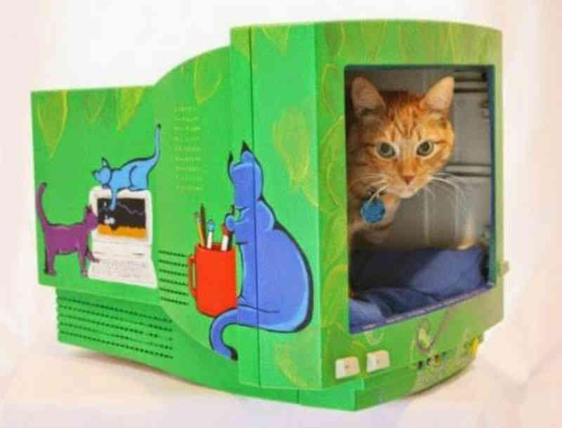 Alunos reciclam monitores de computadores para dar abrigo a gatos