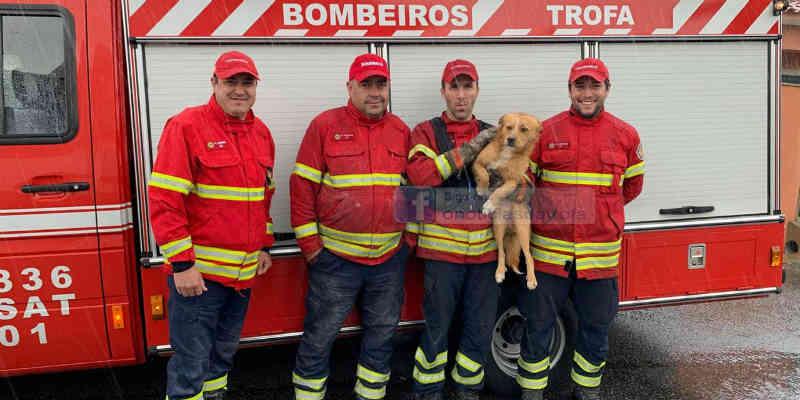 Bombeiros resgatam cão num silvado em Portugal
