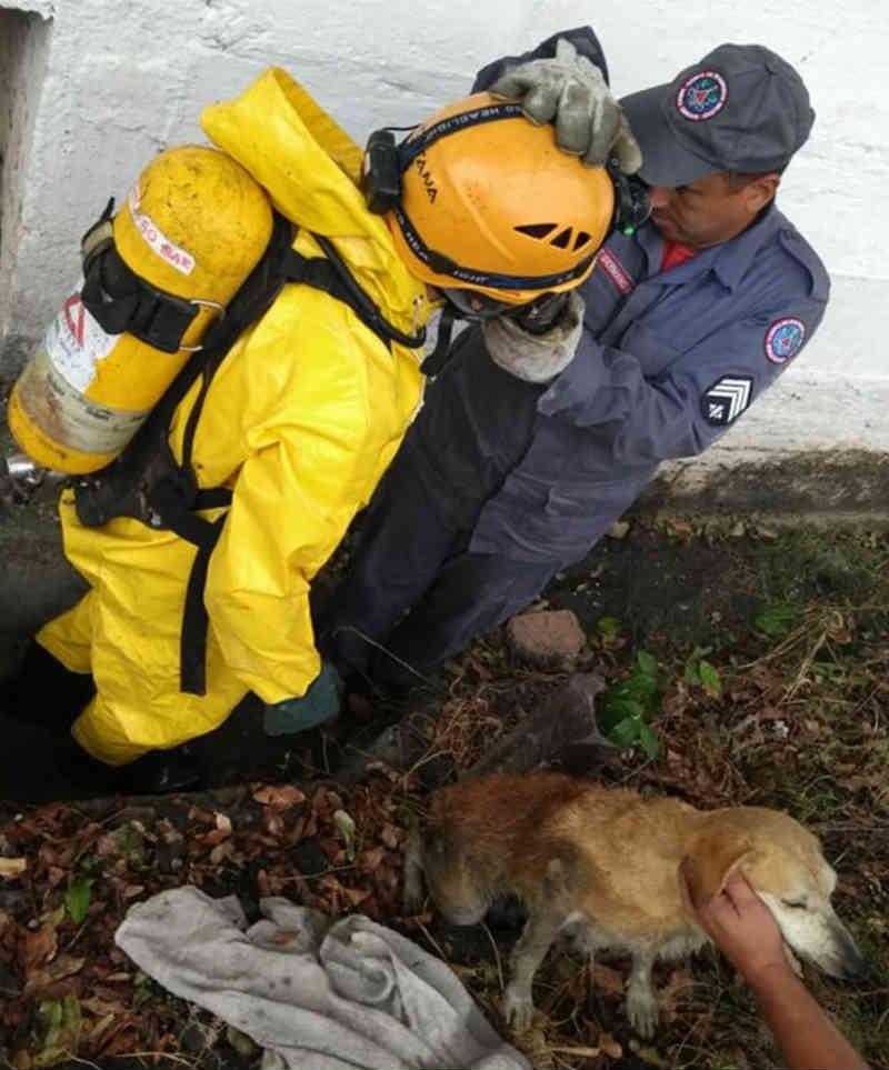 Cadela é resgatada pelo Corpo de Bombeiros após cair dentro de bueiro em Além Paraíba, MG