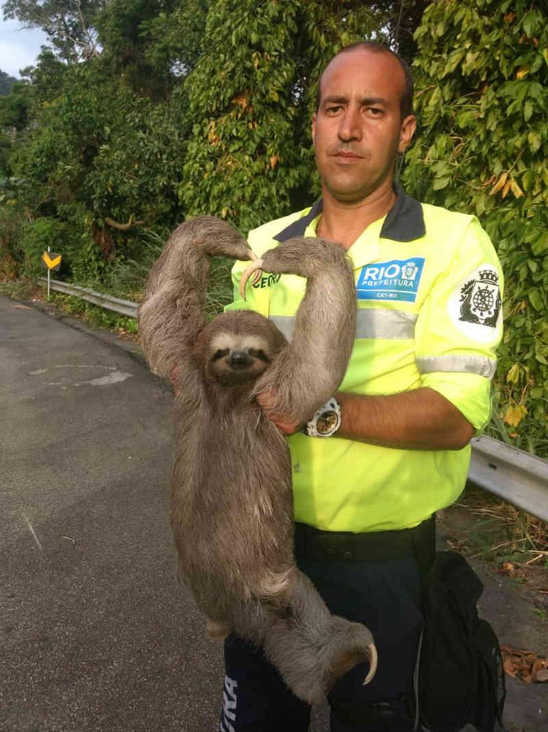 Preguiça é resgatada em estrada na Zona Norte do RJ — Foto: Reprodução Internet