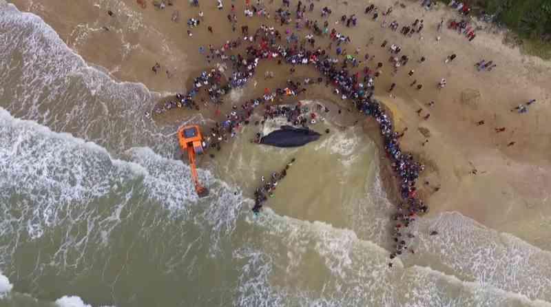 Bombeiros do RJ concorrem a prêmio internacional por salvamento de baleia-jubarte em Búzios, no RJ