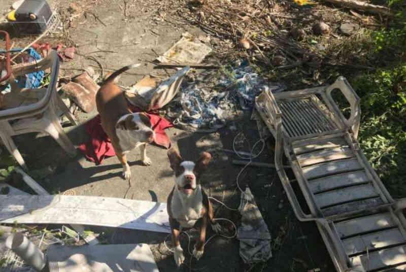 Justiça do Rio de Janeiro manda devolver quatro cães da raça pit bull para tutores acusados de maus-tratos