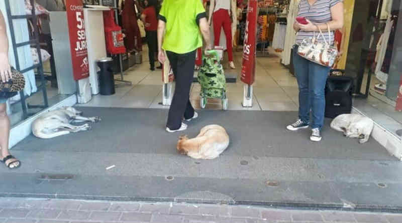 Preocupada com calor, loja libera entrada para cachorros curtirem o ar-condicionado em São Gonçalo, RJ
