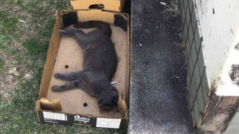 Justiça determina que Carrefour da Barra não pratique 'extermínio de gatos'