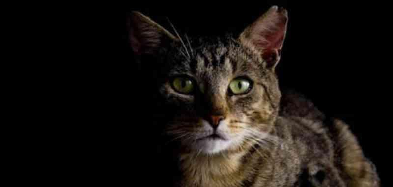 Rio: Carrefour da Barra da Tijuca é denunciado por morte de gatos