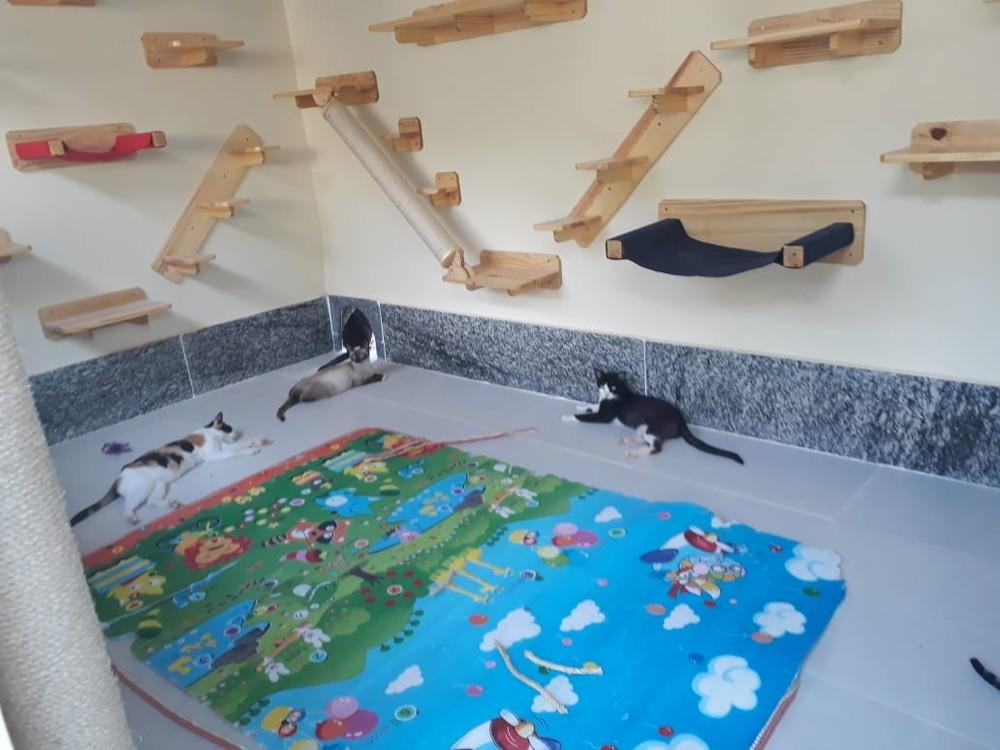Rio: animais abrigados na Fazenda Modelo ganham gatil