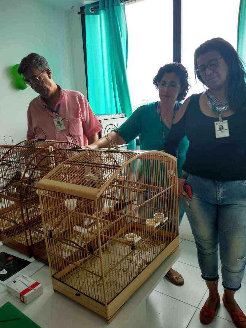 Coordenadoria de Proteção Animal apreende pássaros silvestres na Trindade , em São Gonçalo, RJ