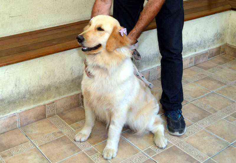 RJ: cadela que sofreu sequestro passa por cuidados veterinários