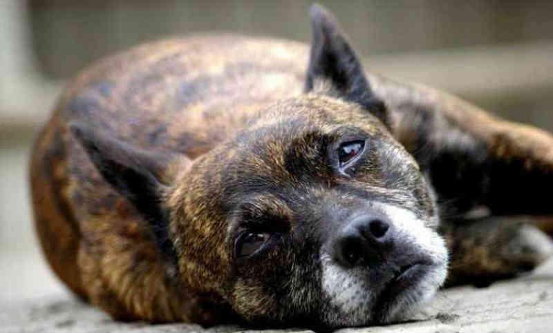 Veja formas de ajudar cães e gatos abandonados e vítimas de maus-tratos