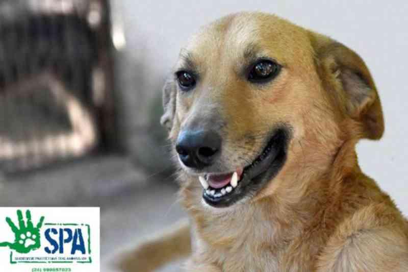 Cães continuam abandonados em Volta Redonda (RJ) mesmo após repercussão do caso 'Manchinha'
