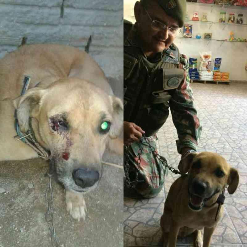 Polícia Ambiental toma procedimentos cabíveis e clinica veterinária, parceira da polícia, socorre o animal ferido e não cobra nada
