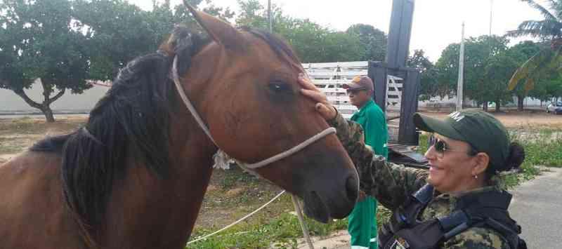 Cavalos resgatados pela Guarda Municipal de Natal / Foto | Assecom SEMDES/GMN