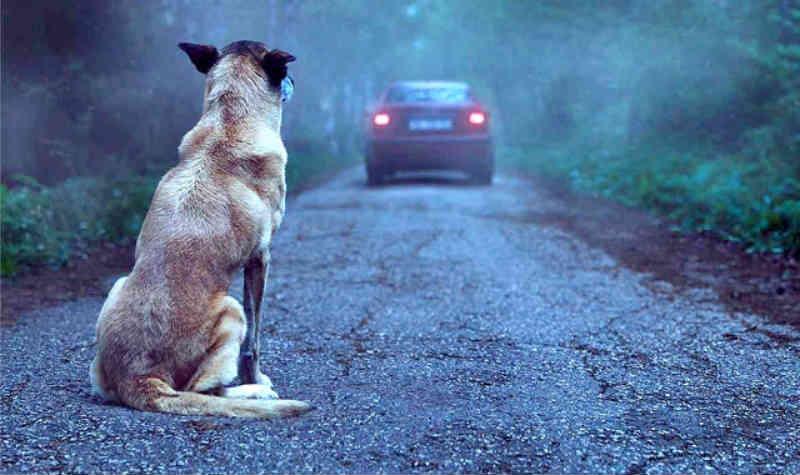 Boa Vista (RR) poderá ter lei que punirá maus-tratos a animais