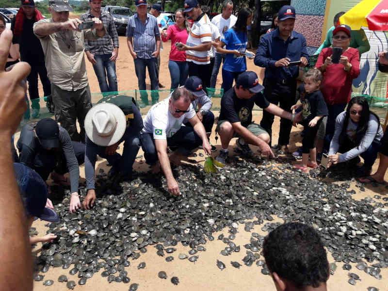 Meio milhão de tartarugas são salvas em 2018 com ajuda de voluntários de RO