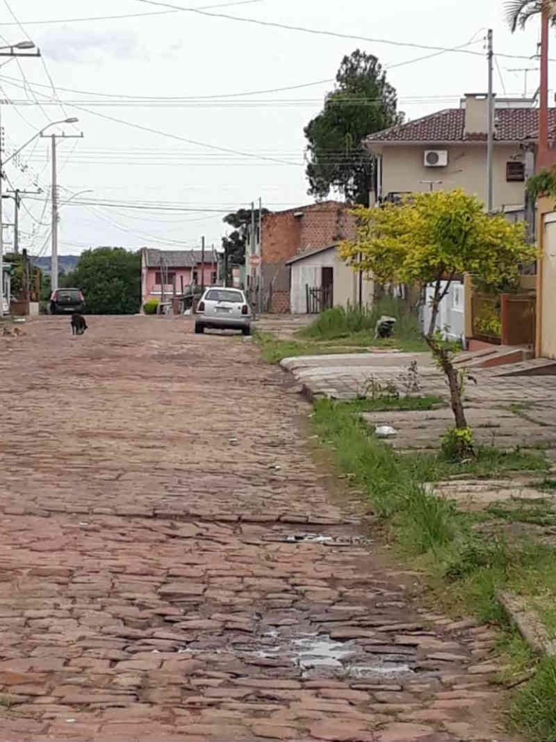 Homem compra gato preto para ritual religioso; a denúncia vem da Vila Nova, Alegrete, RS