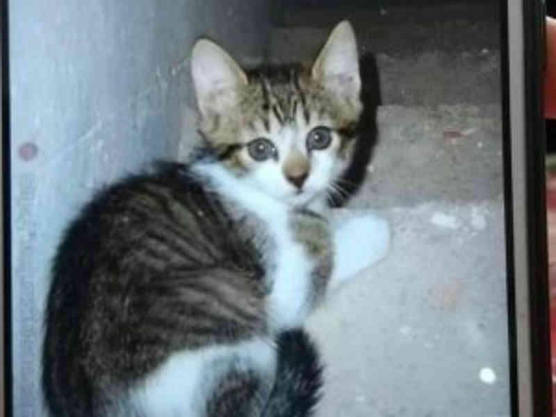 Jovem denuncia vizinho por matar gato com machadada no Cruzeiro, em Caxias do Sul, RS