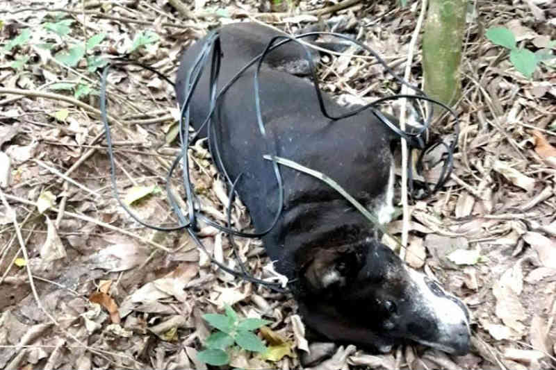 Cachorro morre após ser enforcado em Santa Cruz do Sul, RS