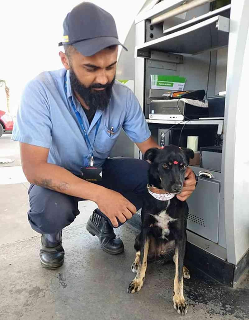 Cão é adotado por funcionários de posto de combustíveis em Camaquã, RS