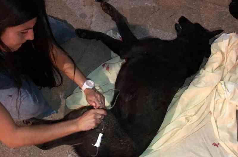 Morte de cadela a tiros gera revolta e depredação em posto de combustíveis no Chuí, RS