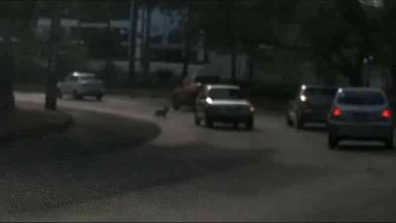 Protetores flagram caminhoneiros abandonando cães em Dois Irmãos, RS