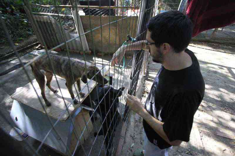 Porto Alegre: com aumento do abandono de animais, ONG Patas Dadas fecha pela segunda vez