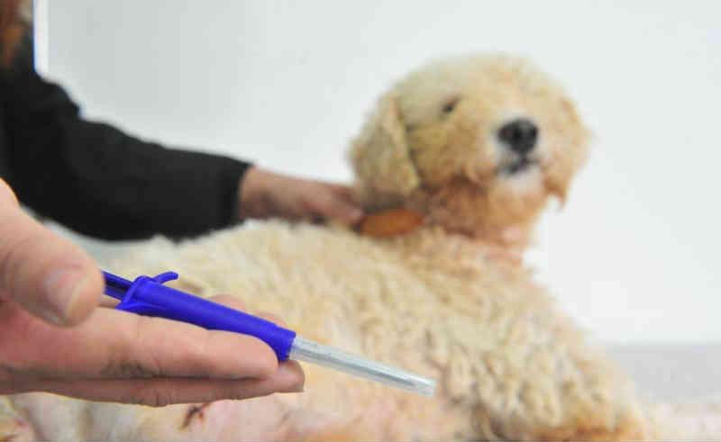 Falta de chip em animais rende notificações em Joinville, SC