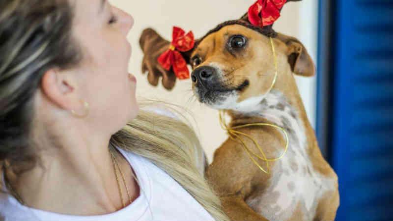 Cães participam de ensaio fotográfico de Natal para estimular adoção em Tubarão, SC
