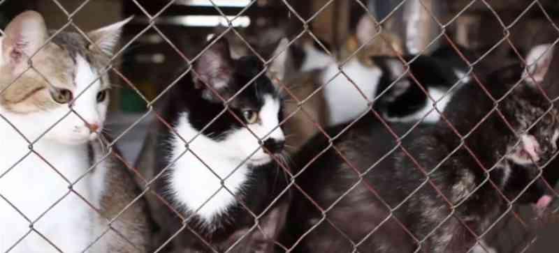 Justiça dá prazo de 90 dias para que prefeitura apreenda animais de acumuladora de Botuverá, SC